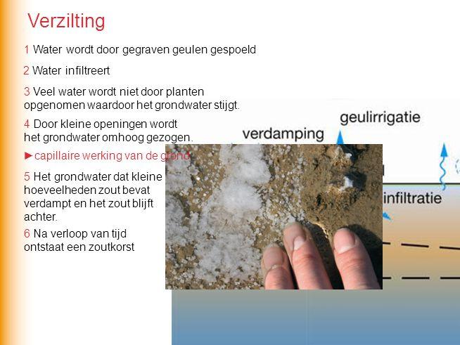 1 2 3 4 5 6 1 Water wordt door gegraven geulen gespoeld 2 Water infiltreert 3 Veel water wordt niet door planten opgenomen waardoor het grondwater stijgt.
