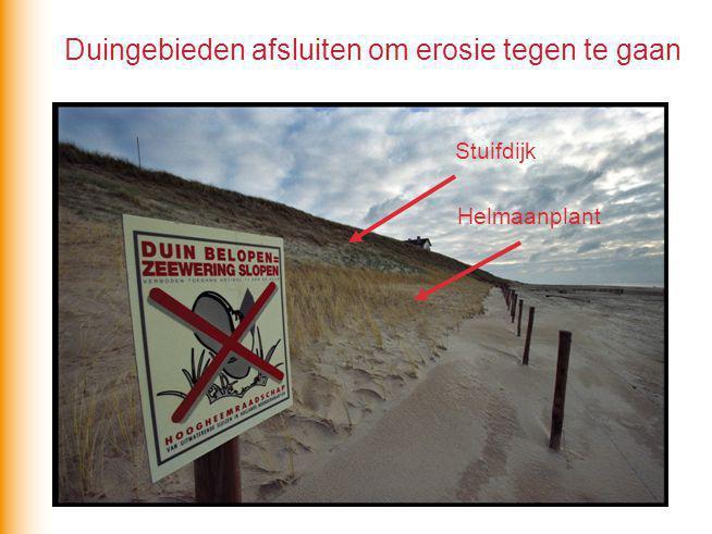 Duingebieden afsluiten om erosie tegen te gaan Helmaanplant Stuifdijk