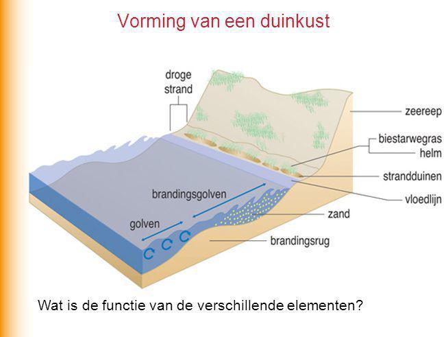 Slufter op Texel: ecologische parel Gebied met hoge dynamiek en veel gradiënten Hoge diversiteit Noem twee gradiënten in dit gebied.