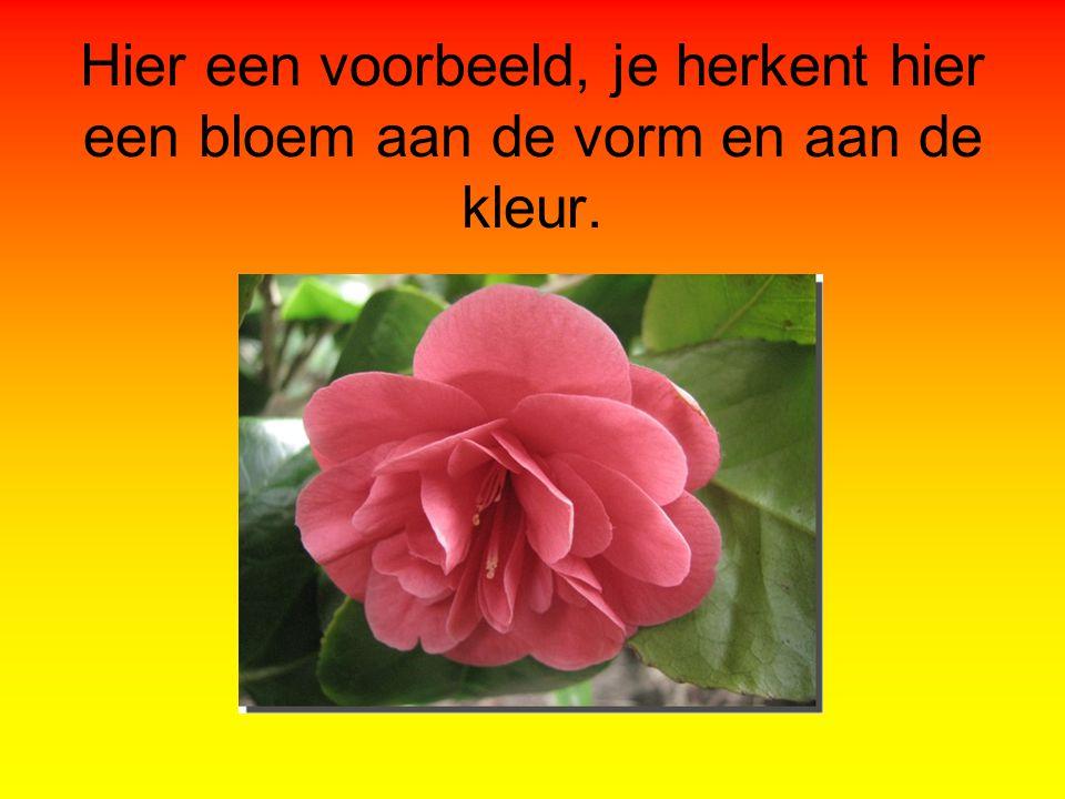 Hier een voorbeeld, je herkent hier een bloem aan de vorm en aan de kleur.