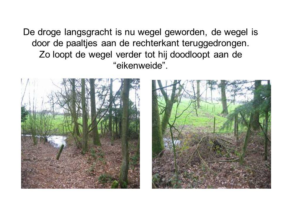 De levende en enkele afgestorven eiken zijn getuige dat deze wegel vroeger hier langs liep.