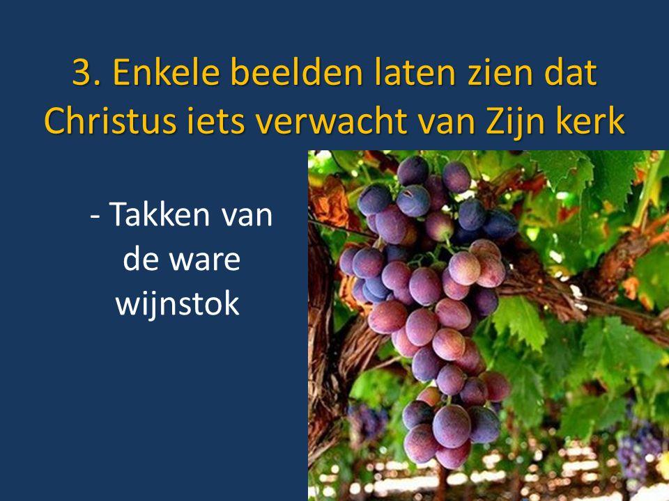 3. Enkele beelden laten zien dat Christus iets verwacht van Zijn kerk - Takken van de ware wijnstok