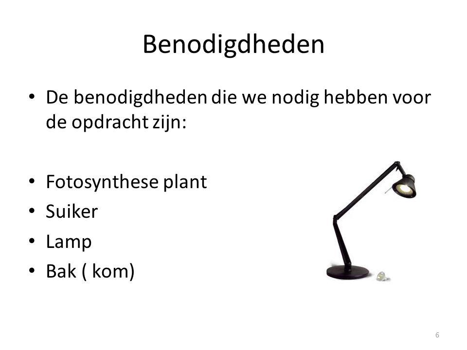 Benodigdheden De benodigdheden die we nodig hebben voor de opdracht zijn: Fotosynthese plant Suiker Lamp Bak ( kom) 6