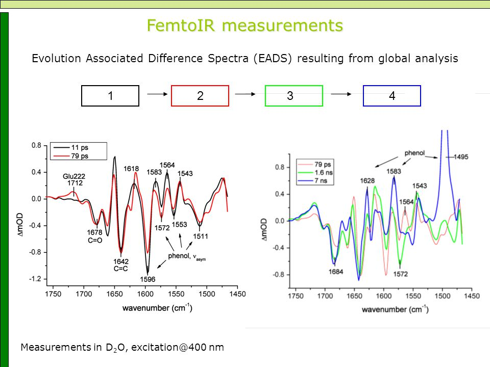 FemtoIR measurements Evolution Associated Difference Spectra (EADS) resulting from global analysis 1234 Measurements in D 2 O, excitation@400 nm