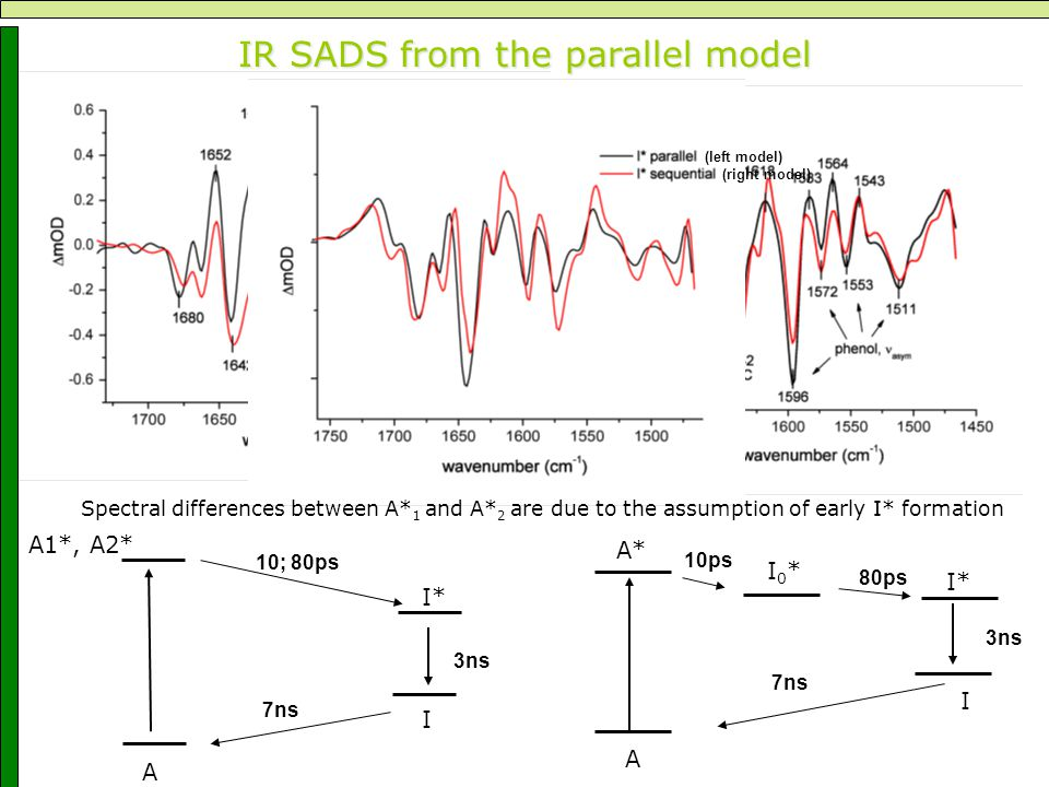 IR SADS from the parallel model A A1*, I* I A2* 10; 80ps 3ns 7ns A A* I* I I0*I0* 10ps 80ps 3ns 7ns (left model) (right model) Spectral differences between A* 1 and A* 2 are due to the assumption of early I* formation