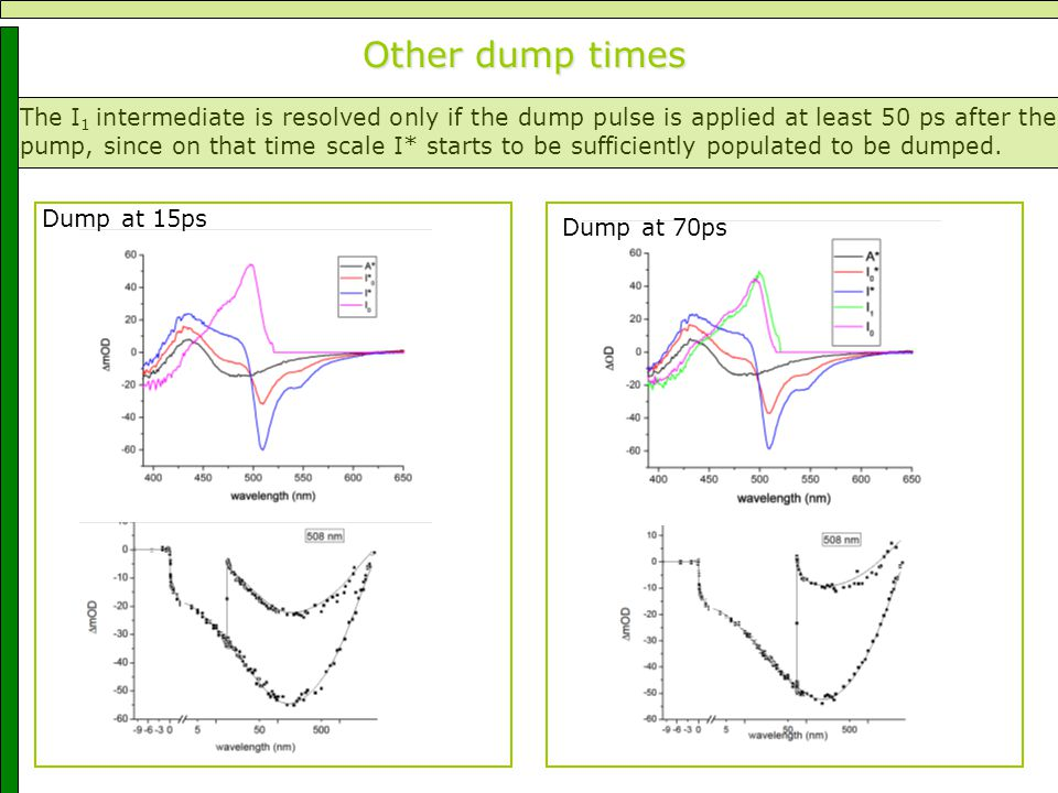 Other dump times The I 1 intermediate is resolved only if the dump pulse is applied at least 50 ps after the pump, since on that time scale I* starts to be sufficiently populated to be dumped.