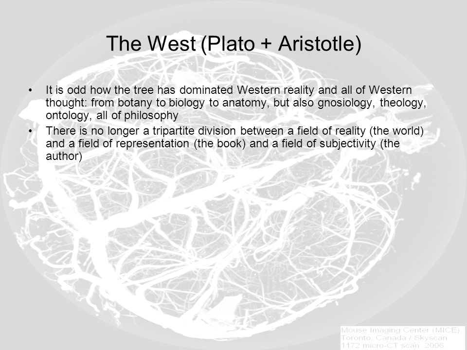 The West (Plato + Aristotle) It is odd how the tree has dominated Western reality and all of Western thought: from botany to biology to anatomy, but also gnosiology, theology, ontology, all of philosophy There is no longer a tripartite division between a field of reality (the world) and a field of representation (the book) and a field of subjectivity (the author)