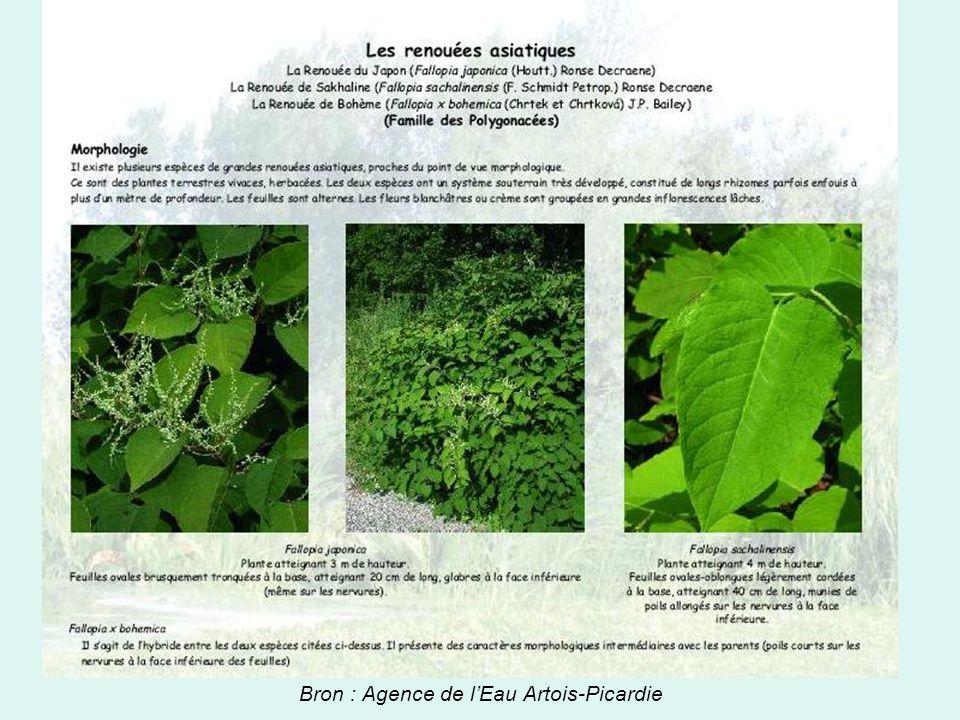 Bron : Agence de l'Eau Artois-Picardie