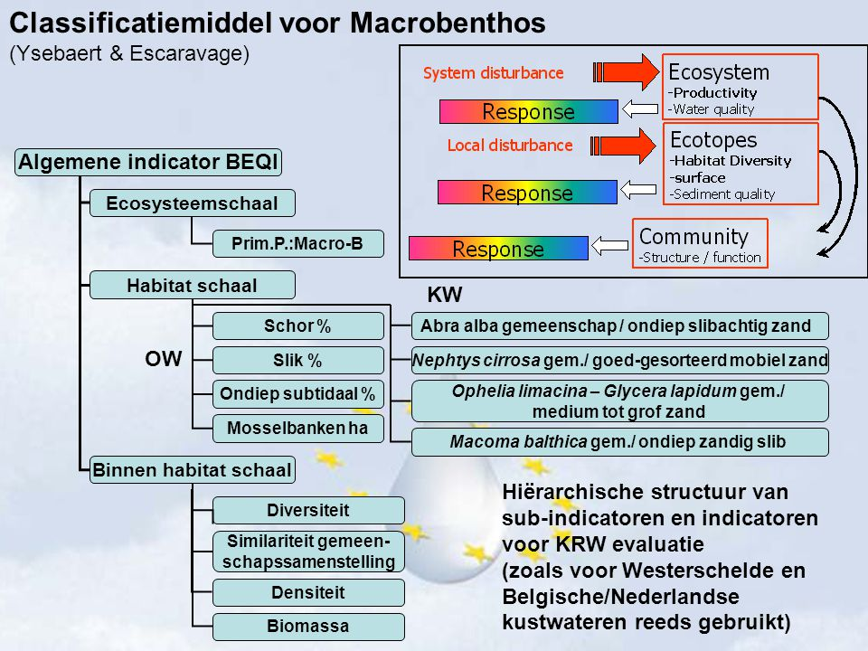 Classificatiemiddel voor Macrobenthos (Ysebaert & Escaravage) Ecosysteemschaal Habitat schaal Binnen habitat schaal Schor % Slik % Ondiep subtidaal %
