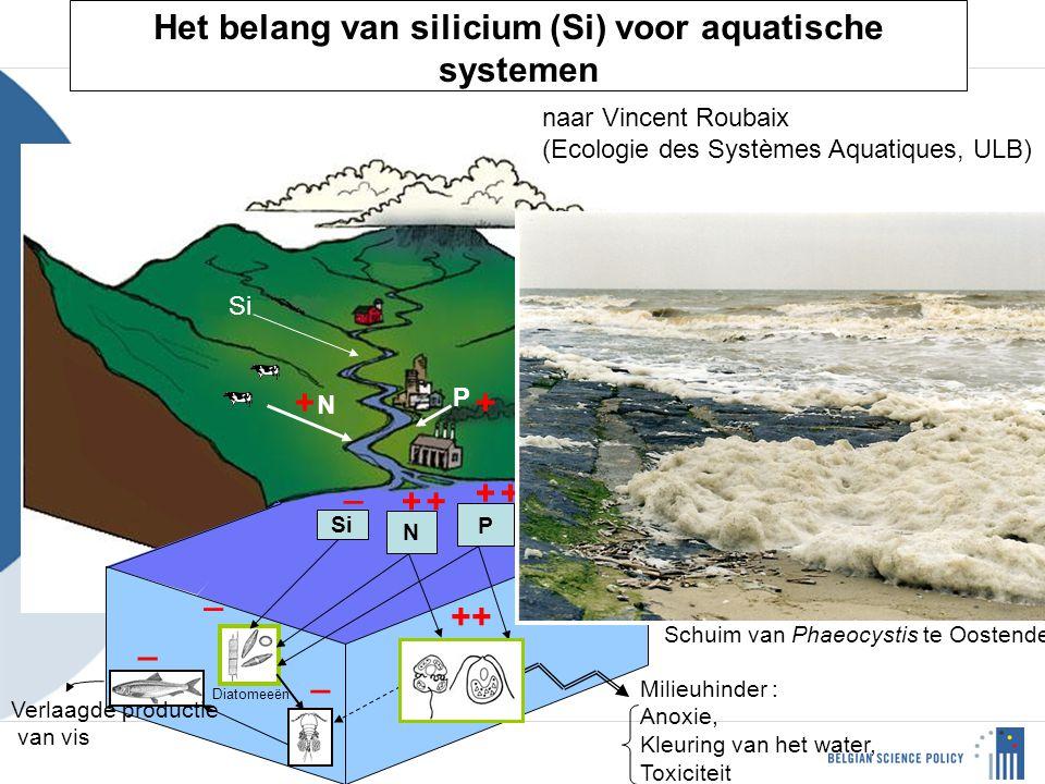 Het belang van silicium (Si) voor aquatische systemen N P Si N P + + ++ _ _ _ _ ++ Algues non siliceuses Diatomeeën Milieuhinder : Anoxie, Kleuring van het water, Toxiciteit Verlaagde productie van vis + + Schuim van Phaeocystis te Oostende naar Vincent Roubaix (Ecologie des Systèmes Aquatiques, ULB)