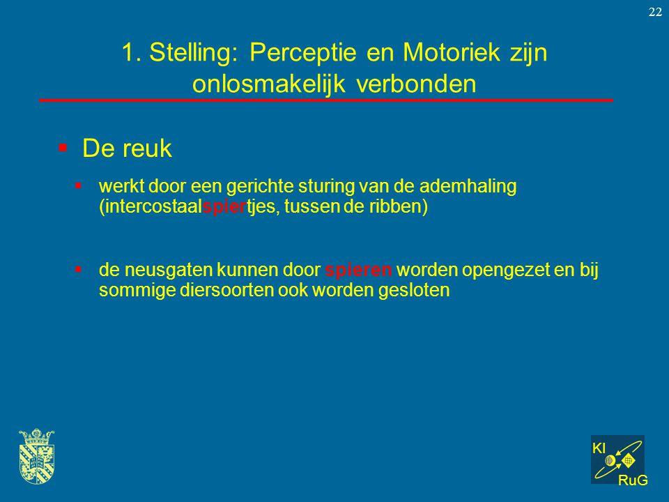 KI RuG 22  De reuk 1. Stelling: Perceptie en Motoriek zijn onlosmakelijk verbonden  werkt door een gerichte sturing van de ademhaling (intercostaals