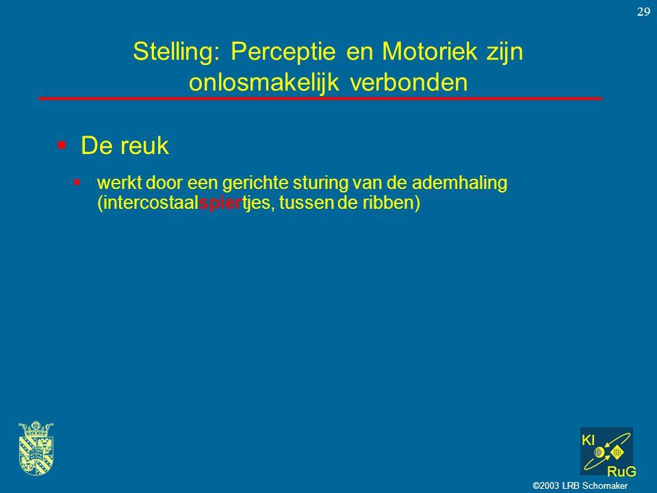 KI RuG ©2003 LRB Schomaker 29  De reuk Stelling: Perceptie en Motoriek zijn onlosmakelijk verbonden  werkt door een gerichte sturing van de ademhali
