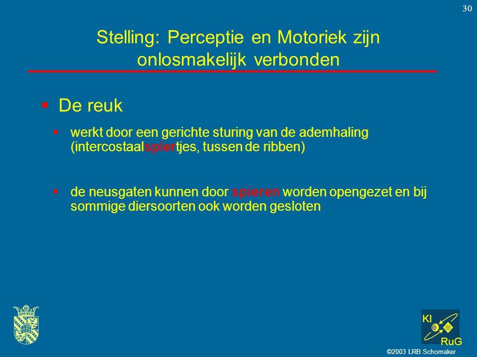 KI RuG ©2003 LRB Schomaker 30  De reuk Stelling: Perceptie en Motoriek zijn onlosmakelijk verbonden  werkt door een gerichte sturing van de ademhali