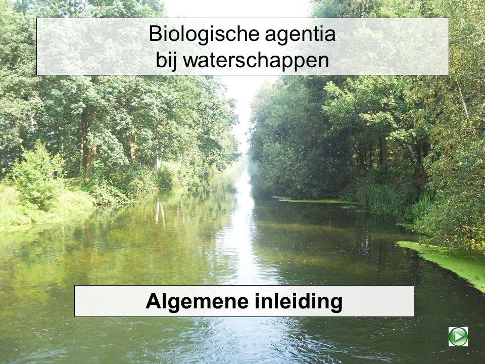 Biologische agentia bij waterschappen Algemene inleiding