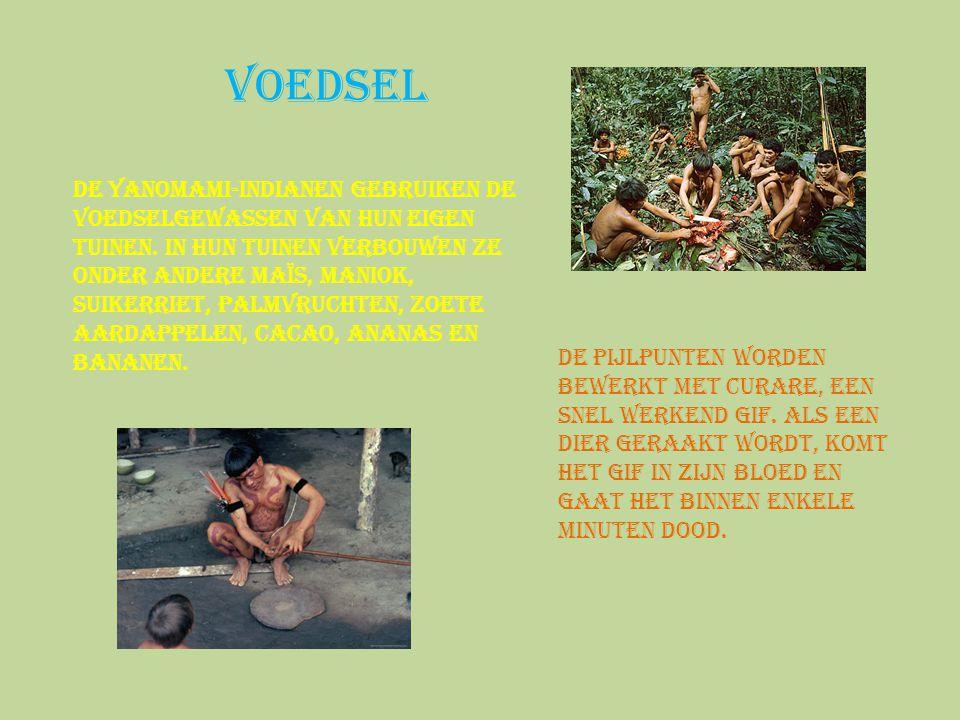 Voedsel De Yanomami-indianen gebruiken de voedselgewassen van hun eigen tuinen. In hun tuinen verbouwen ze onder andere maïs, maniok, suikerriet, palm