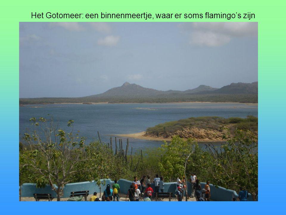 Het Gotomeer: een binnenmeertje, waar er soms flamingo's zijn