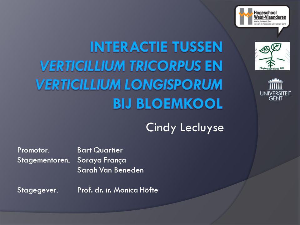 Cindy Lecluyse Promotor: Bart Quartier Stagementoren: Soraya França Sarah Van Beneden Stagegever: Prof.