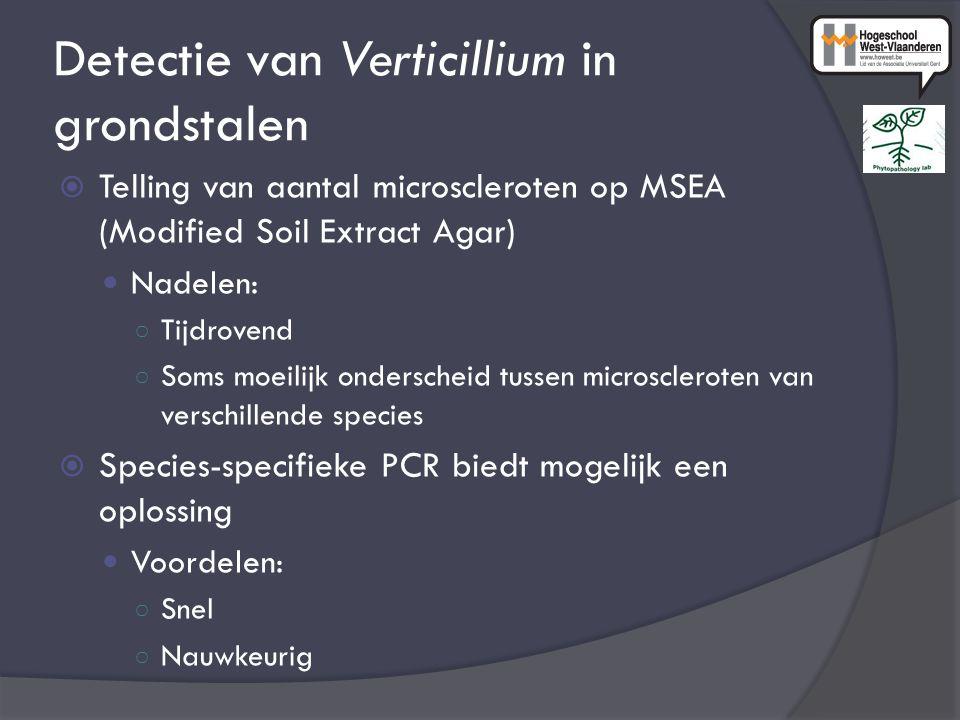 Detectie van Verticillium in grondstalen  Telling van aantal microscleroten op MSEA (Modified Soil Extract Agar) Nadelen: ○ Tijdrovend ○ Soms moeilijk onderscheid tussen microscleroten van verschillende species  Species-specifieke PCR biedt mogelijk een oplossing Voordelen: ○ Snel ○ Nauwkeurig
