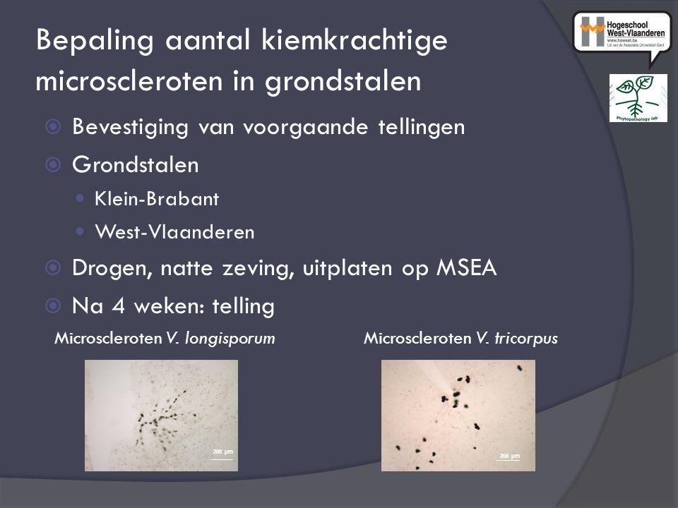 Bepaling aantal kiemkrachtige microscleroten in grondstalen  Bevestiging van voorgaande tellingen  Grondstalen Klein-Brabant West-Vlaanderen  Drogen, natte zeving, uitplaten op MSEA  Na 4 weken: telling Microscleroten V.