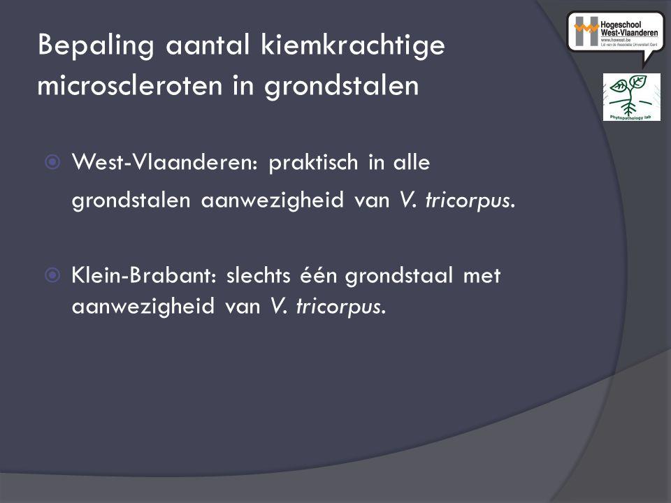 Bepaling aantal kiemkrachtige microscleroten in grondstalen  West-Vlaanderen: praktisch in alle grondstalen aanwezigheid van V. tricorpus.  Klein-Br