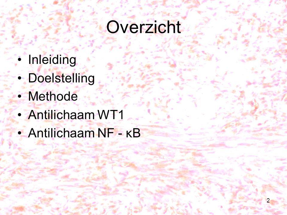 2 Overzicht Inleiding Doelstelling Methode Antilichaam WT1 Antilichaam NF - κB