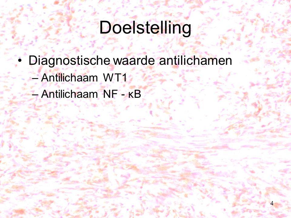 4 Doelstelling Diagnostische waarde antilichamen –Antilichaam WT1 –Antilichaam NF - κB