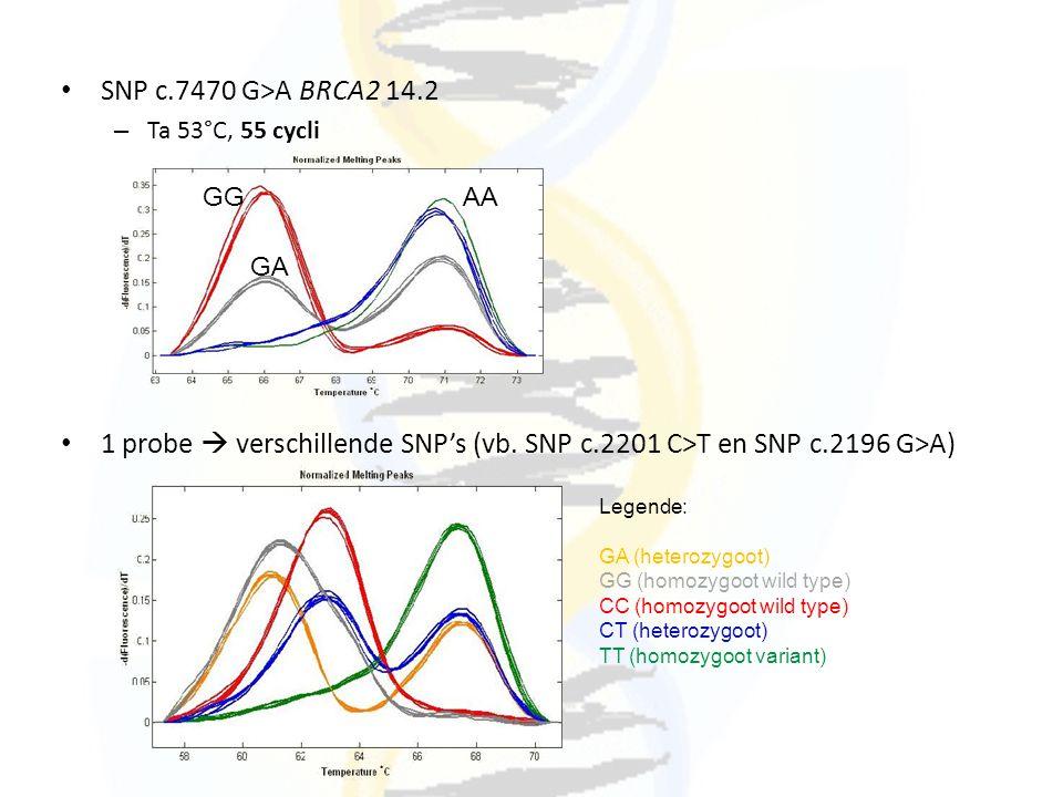 SNP c.7470 G>A BRCA2 14.2 – Ta 53°C, 55 cycli 1 probe  verschillende SNP's (vb. SNP c.2201 C>T en SNP c.2196 G>A) GGAA GA Legende: GA (heterozygoot)