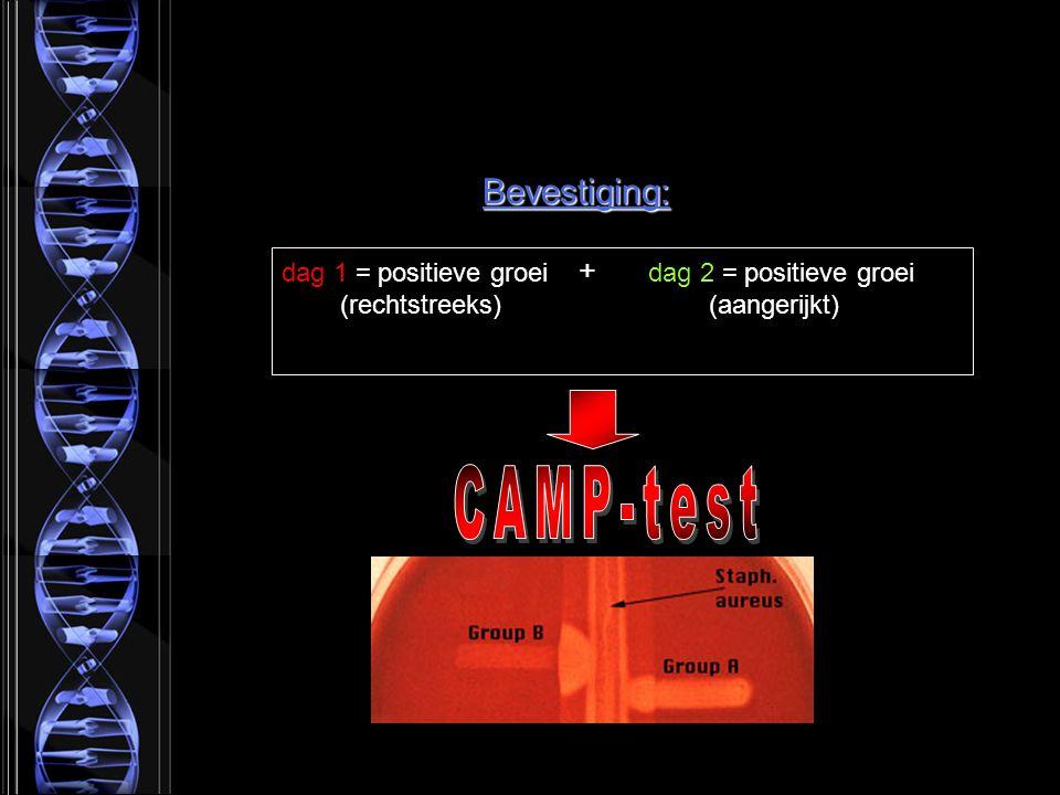 Bevestiging: dag 1 = positieve groei + dag 2 = positieve groei (rechtstreeks) (aangerijkt)