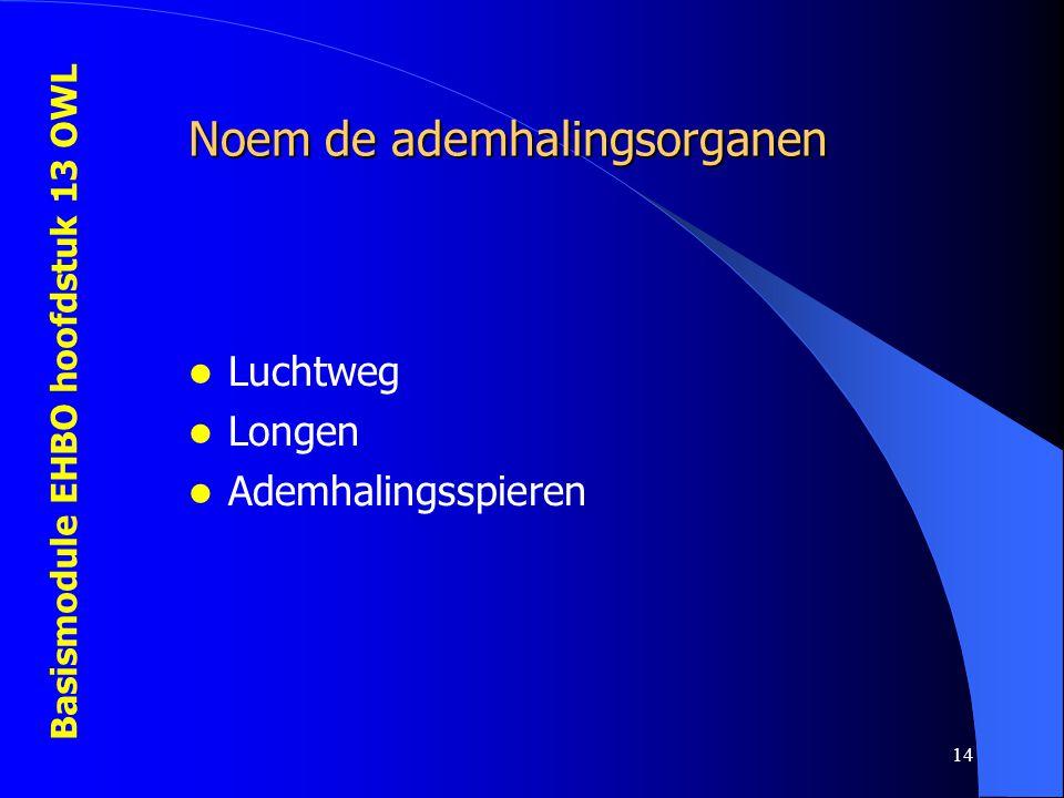 Basismodule EHBO hoofdstuk 13 OWL 14 Noem de ademhalingsorganen Luchtweg Longen Ademhalingsspieren