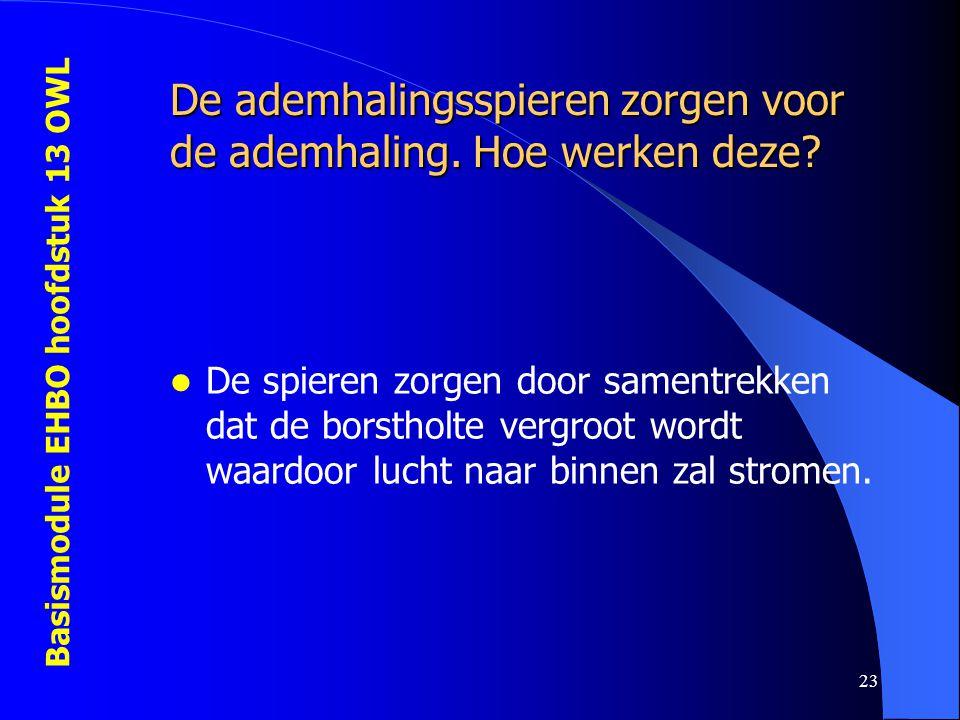 Basismodule EHBO hoofdstuk 13 OWL 23 De ademhalingsspieren zorgen voor de ademhaling. Hoe werken deze? De spieren zorgen door samentrekken dat de bors