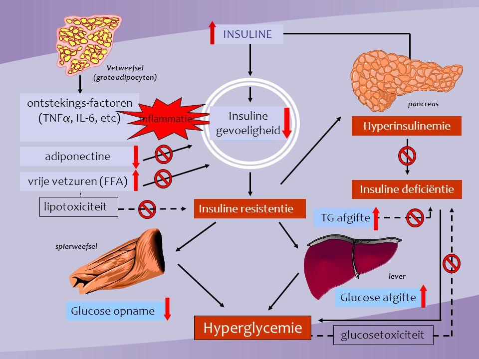 Genetisch: 1,2 Insulinedeficiëntie ↓ bèta-cel functie → ↓ insulinesecretie 350 300 250 200 150 100 50 Insuline level Insulineresistentie Afname beta-cel functie 250 200 150 100 50 0 Relatieve beta-cel functie (%) Nuchtere glycemie Post-prandiale glycemie Glucose (mmol/ltr Obesitas IGT Diabetes Ongecontroleerde hyperglycemie Verkregen: 1,2 Insulineresistentie ↑ hepatische glucose productie ↓ glucose opname perifere weefsels DIAGNOSE Jaar -10 -5 0 5 10 15 20 25 30 Klinische complicaties MICRO ↑ MACRO ↑ Verstoorde glucose homeostase: diabetes mellitus type 2 1.