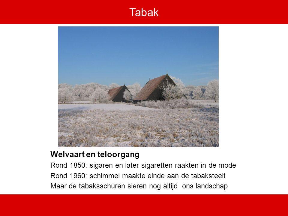 Tabak Welvaart en teloorgang Rond 1850: sigaren en later sigaretten raakten in de mode Rond 1960: schimmel maakte einde aan de tabaksteelt Maar de tabaksschuren sieren nog altijd ons landschap
