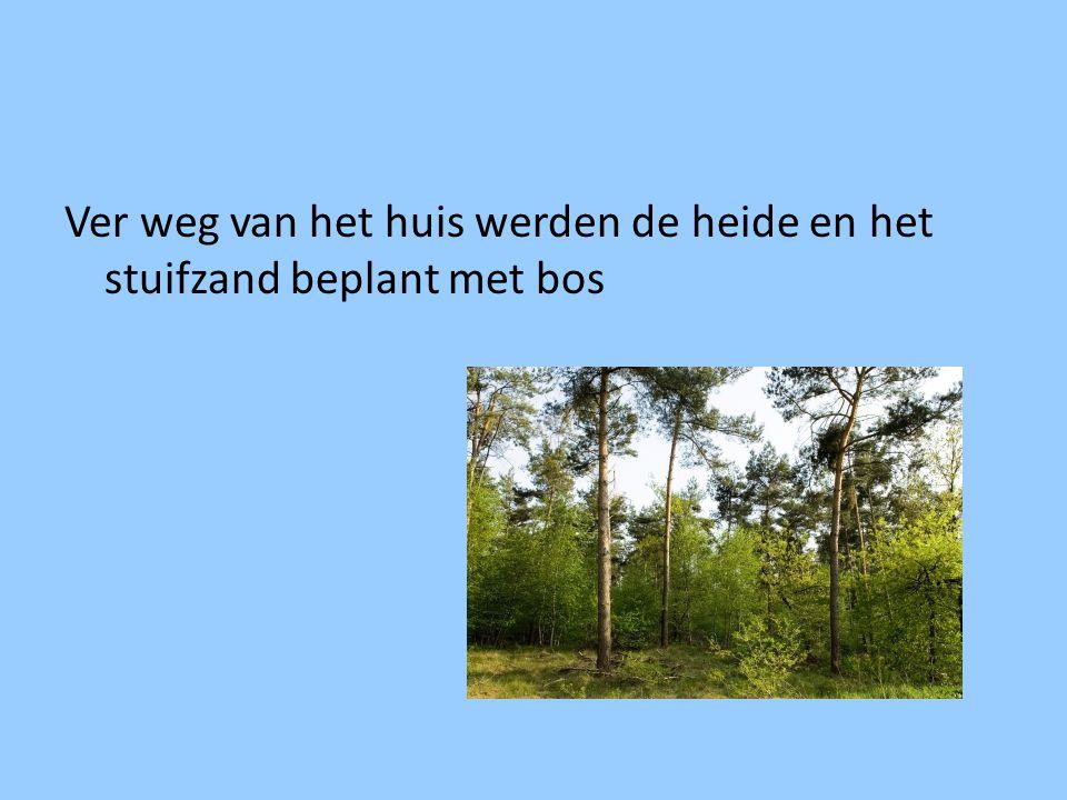 Ver weg van het huis werden de heide en het stuifzand beplant met bos