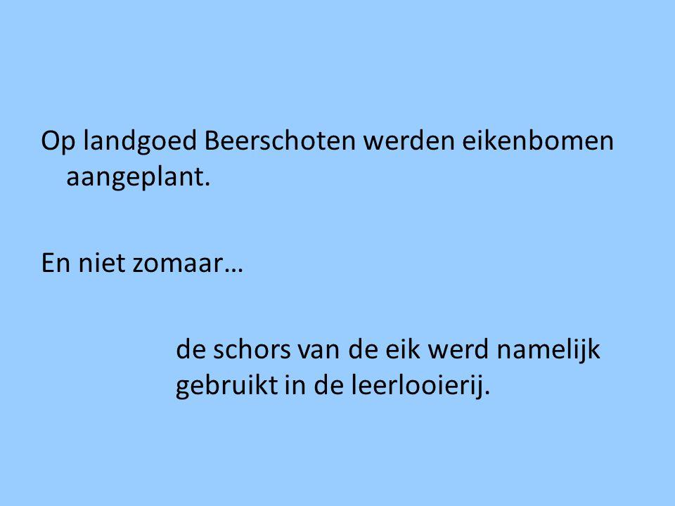 Op landgoed Beerschoten werden eikenbomen aangeplant. En niet zomaar… de schors van de eik werd namelijk gebruikt in de leerlooierij.