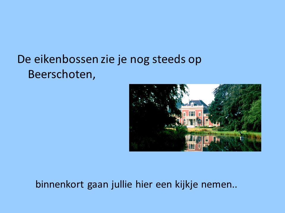 De eikenbossen zie je nog steeds op Beerschoten, binnenkort gaan jullie hier een kijkje nemen..