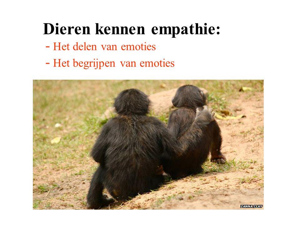Dieren kennen empathie: - Het delen van emoties - Het begrijpen van emoties