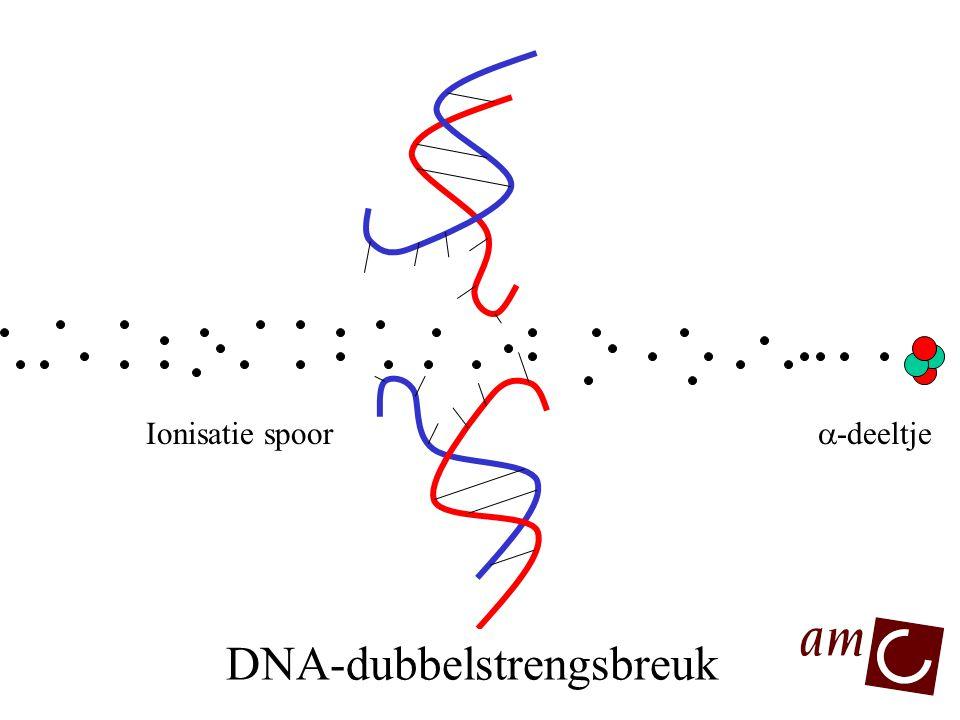 DNA DNA-dubbelstrengsbreuk  -deeltje Ionisatie spoor