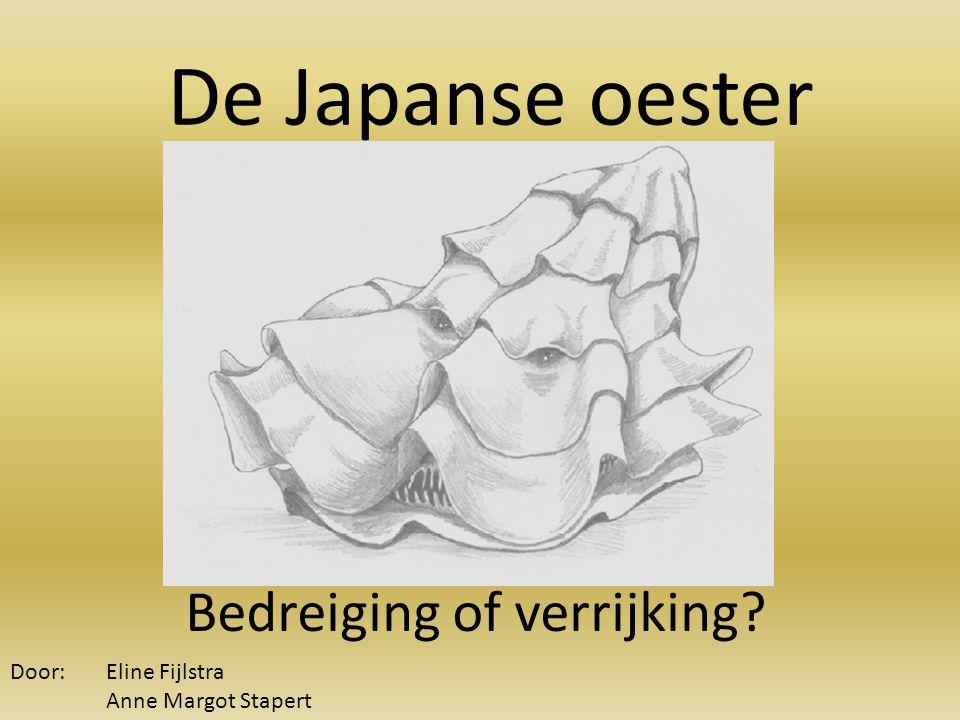 De Japanse oester Bedreiging of verrijking? Door: Eline Fijlstra Anne Margot Stapert