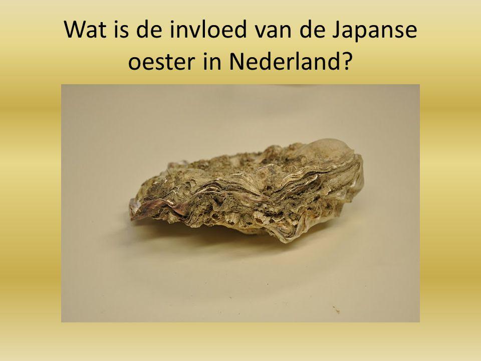 Wat is de invloed van de Japanse oester in Nederland?