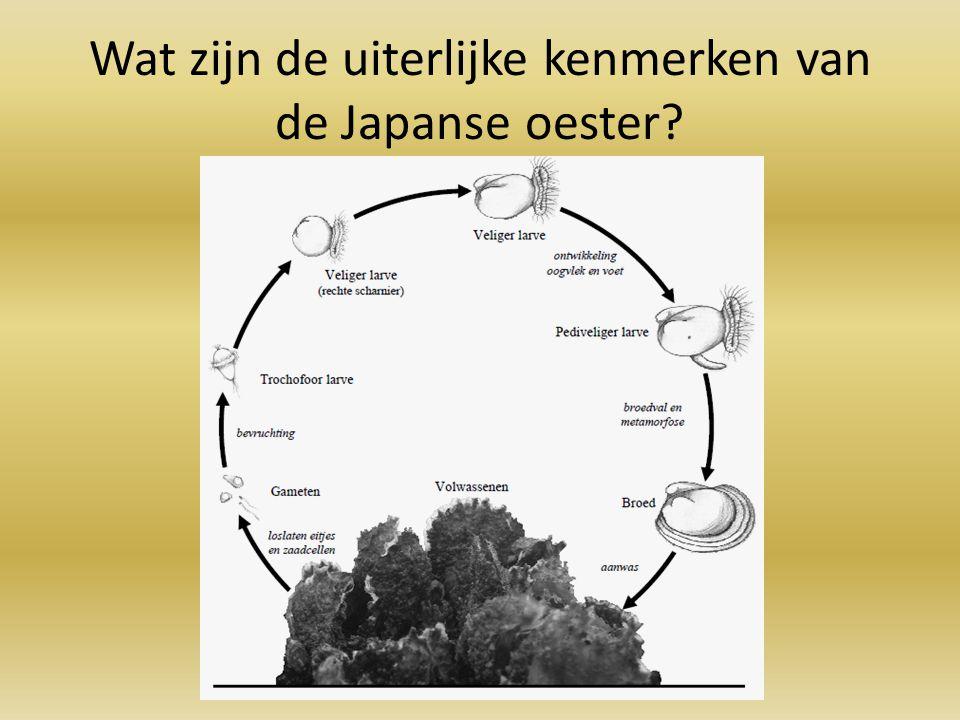 Wat zijn de uiterlijke kenmerken van de Japanse oester?