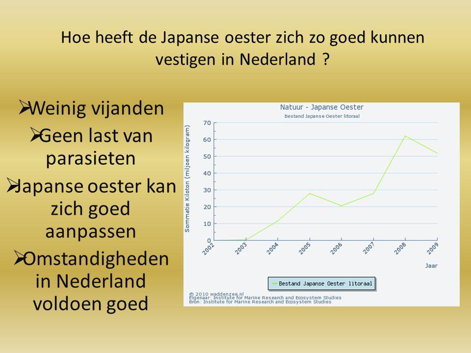 Hoe heeft de Japanse oester zich zo goed kunnen vestigen in Nederland ?  Weinig vijanden  Geen last van parasieten  Japanse oester kan zich goed aa