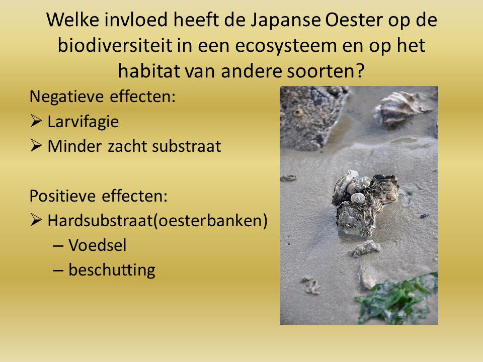 Welke invloed heeft de Japanse Oester op de biodiversiteit in een ecosysteem en op het habitat van andere soorten? Negatieve effecten:  Larvifagie 