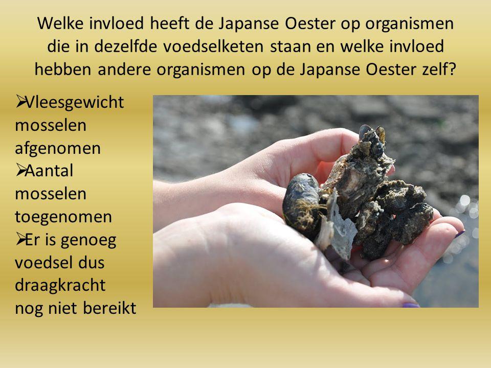 Welke invloed heeft de Japanse Oester op organismen die in dezelfde voedselketen staan en welke invloed hebben andere organismen op de Japanse Oester