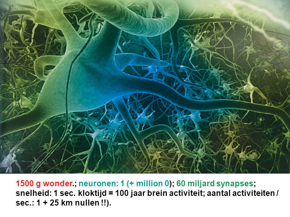 1500 g wonder.; neuronen: 1 (+ million 0); 60 miljard synapses; snelheid: 1 sec. kloktijd = 100 jaar brein activiteit; aantal activiteiten / sec.: 1 +