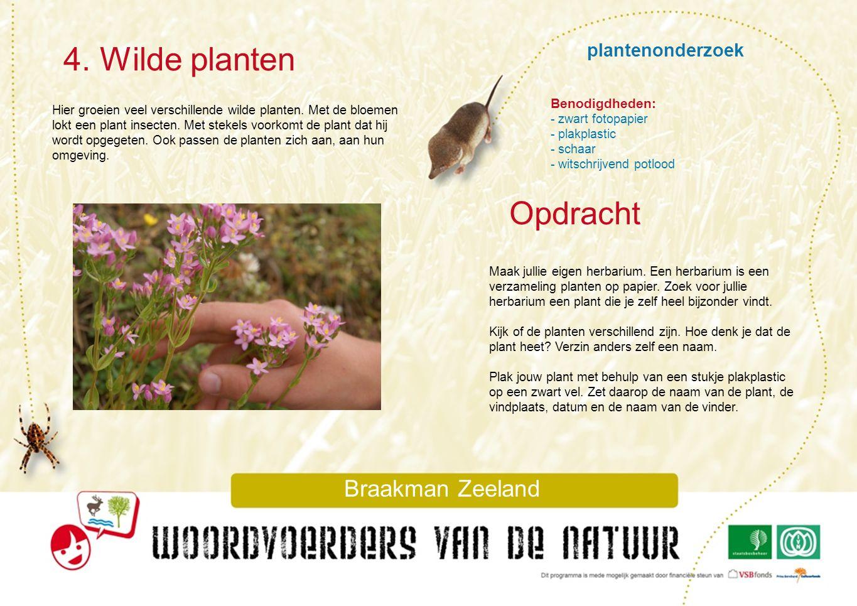 plantenonderzoek 4. Wilde planten Braakman Zeeland Hier groeien veel verschillende wilde planten. Met de bloemen lokt een plant insecten. Met stekels