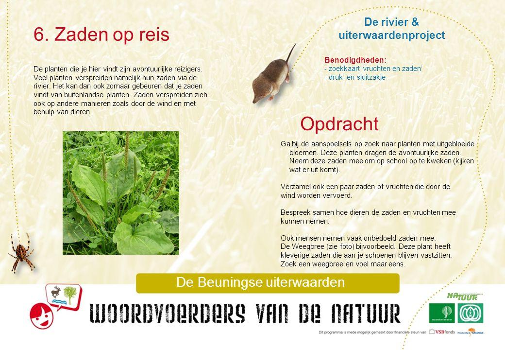 De rivier & uiterwaardenproject 6. Zaden op reis De Beuningse uiterwaarden De planten die je hier vindt zijn avontuurlijke reizigers. Veel planten ver
