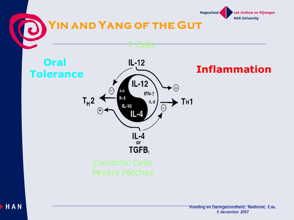 Voeding en Darmgezondheid, Reehorst, Ede, 6 december 2007 Yin and Yang of the Gut Inflammation Oral Tolerance T Cells Dendritic Cells Peyers Patches