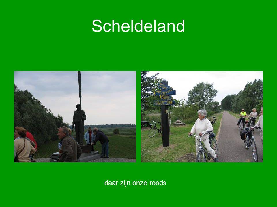 Scheldeland daar zijn onze roods