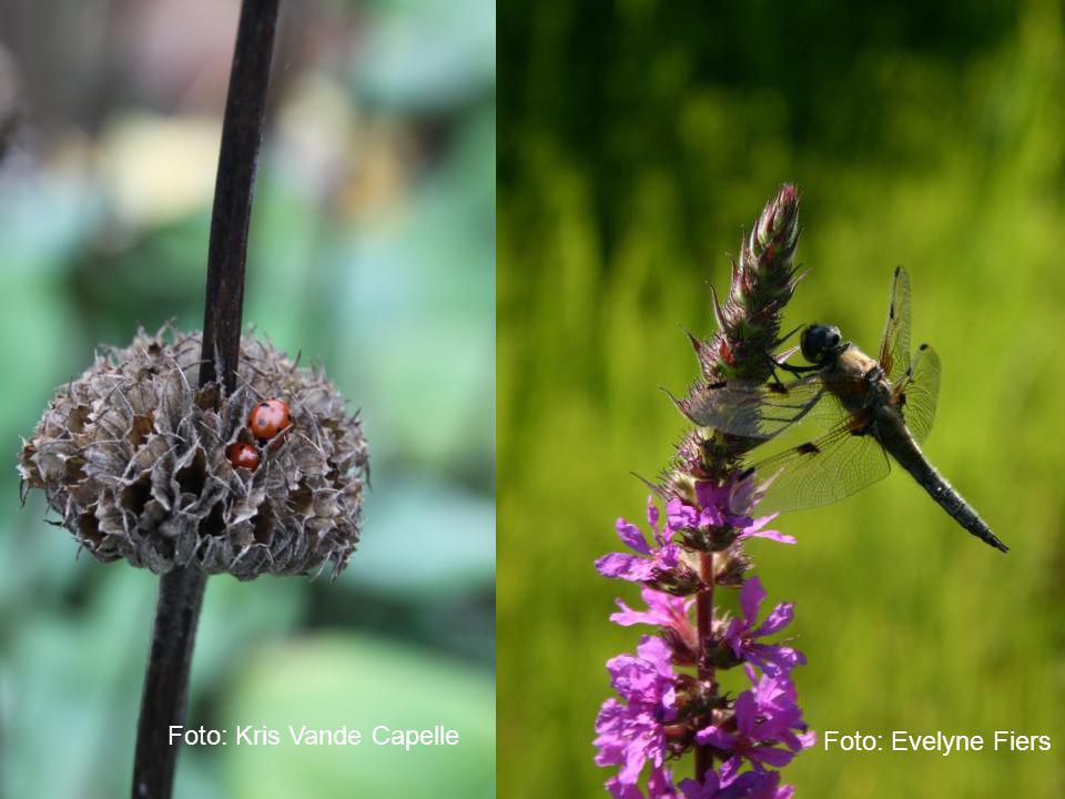 Harmonisch Park- en Groenbeheer natuur Foto: Kris Vande Capelle Foto: Evelyne Fiers