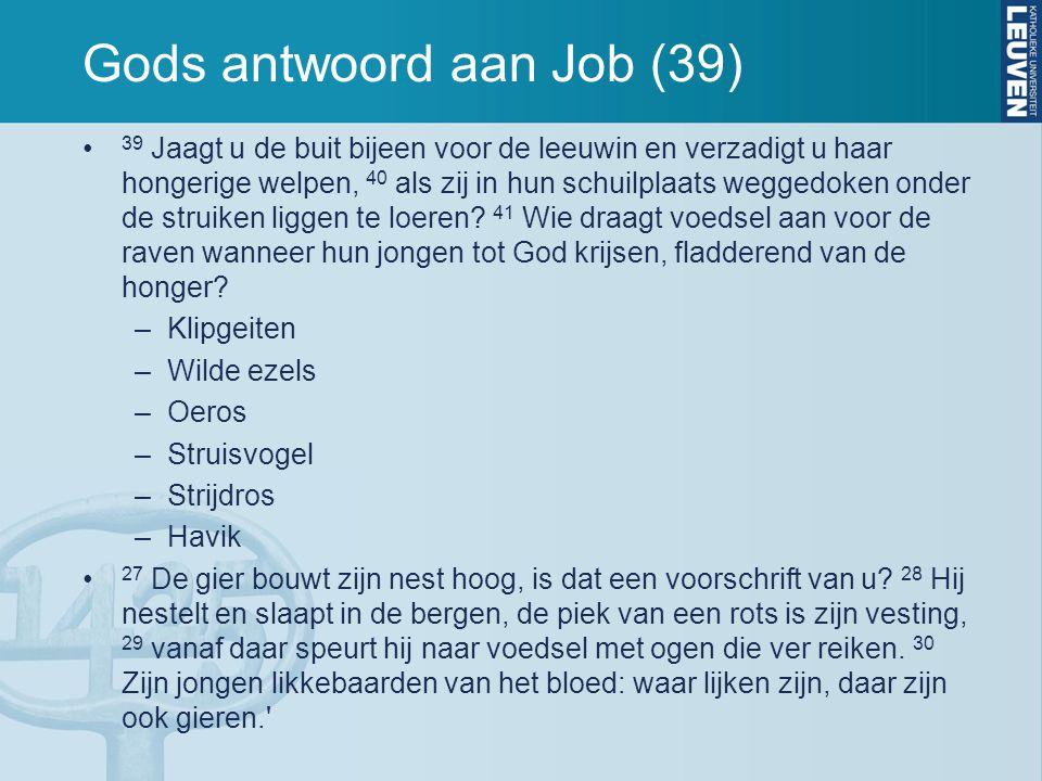 Gods antwoord aan Job (39) 39 Jaagt u de buit bijeen voor de leeuwin en verzadigt u haar hongerige welpen, 40 als zij in hun schuilplaats weggedoken onder de struiken liggen te loeren.